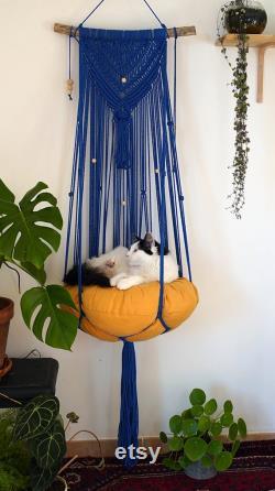 Hamac Holly Cat