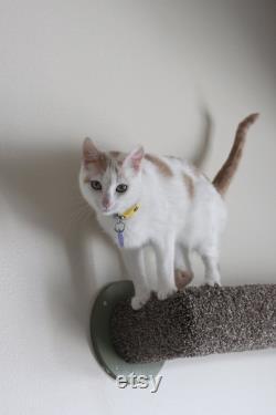 Katzen-bundle